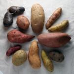 kartoffeln tränensäcke